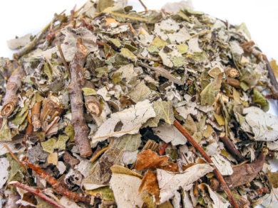 Abedul-Alnus-acuminata
