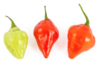 Billy Goat – Capsicum chinense Jacq. – Chilisorte