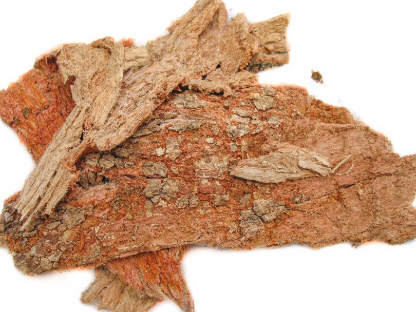 Cancerina - Semialarium mexicanum