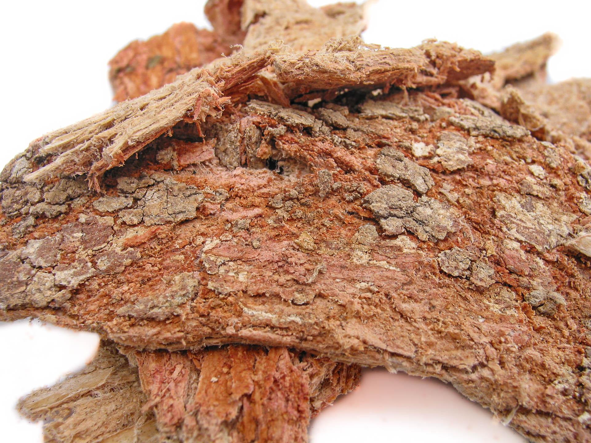 Cancerina-Semialarium-mexicanum