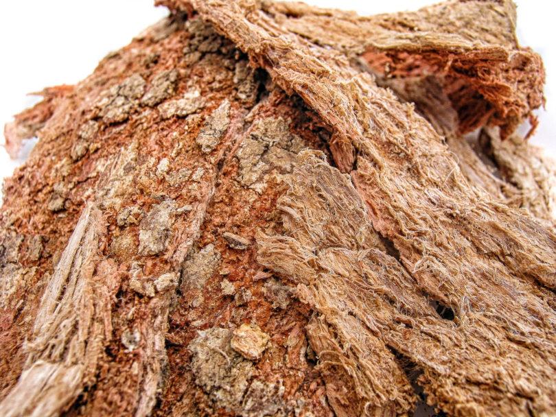 Die Rinde von Semialarium mexicanum wird in Mexiko als Cancerina verkauft
