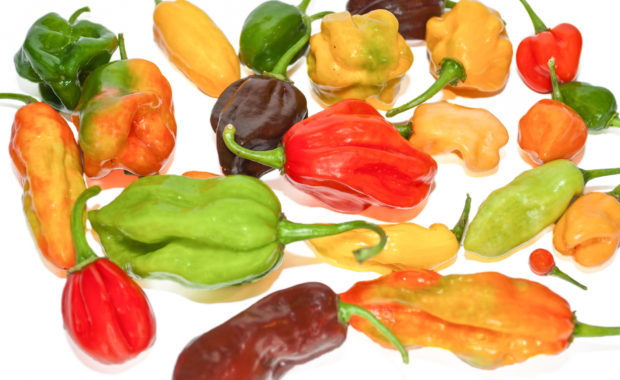 Antillais Carribbean Habanero – Capsicum chinense – Chilisorte