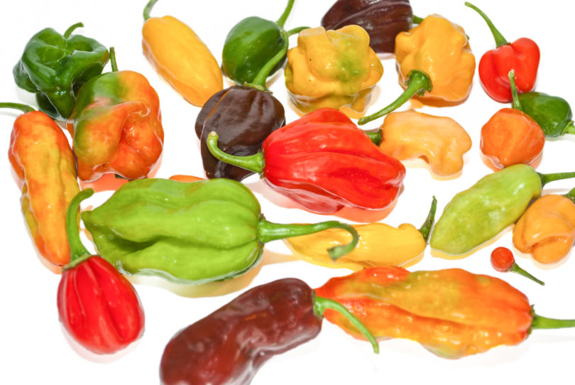 Scotch Bonnet MOA Red - Capsicum chinense