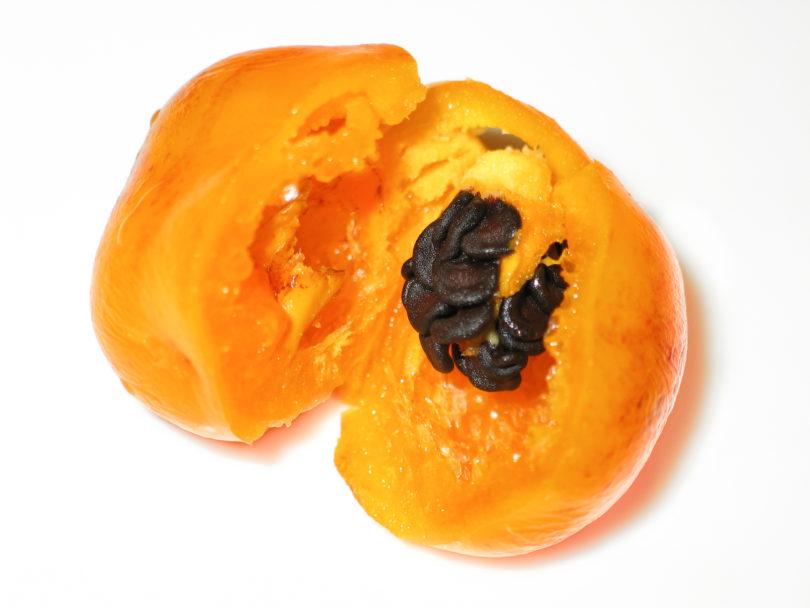 Aji Rocoto-2 - Capsicum pubescens