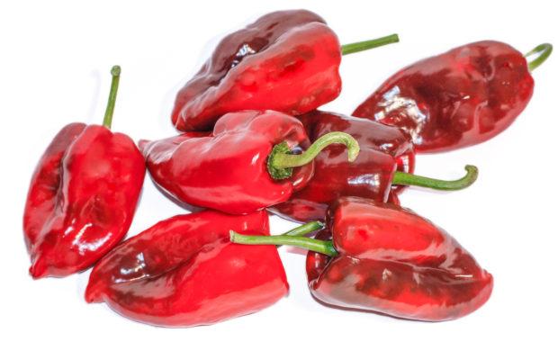 Poblano – Capsicum annuum L. – Chilisorte
