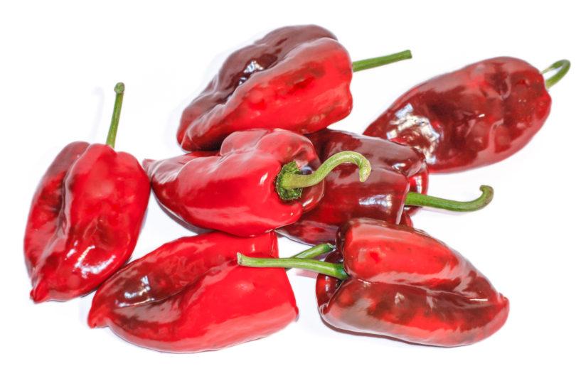 Die Capsicum annuum Sorte Poblano stammt aus Mexiko, wo die frischen oder getrockneten Früchte nicht aus der traditionellen Küche wegzudenken wären.