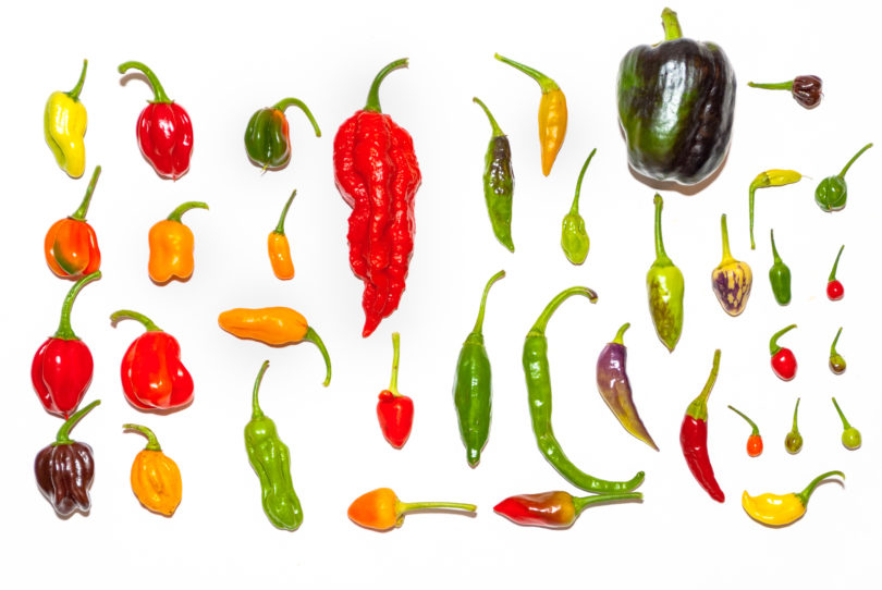 Long Semi-Hot Myra - Capsicum annuum