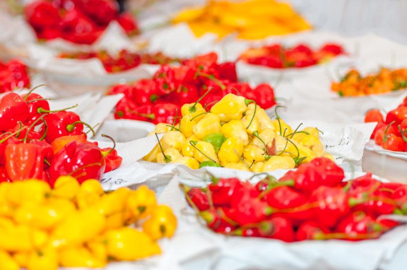 Chilisorten für die Saatgutgewinnung