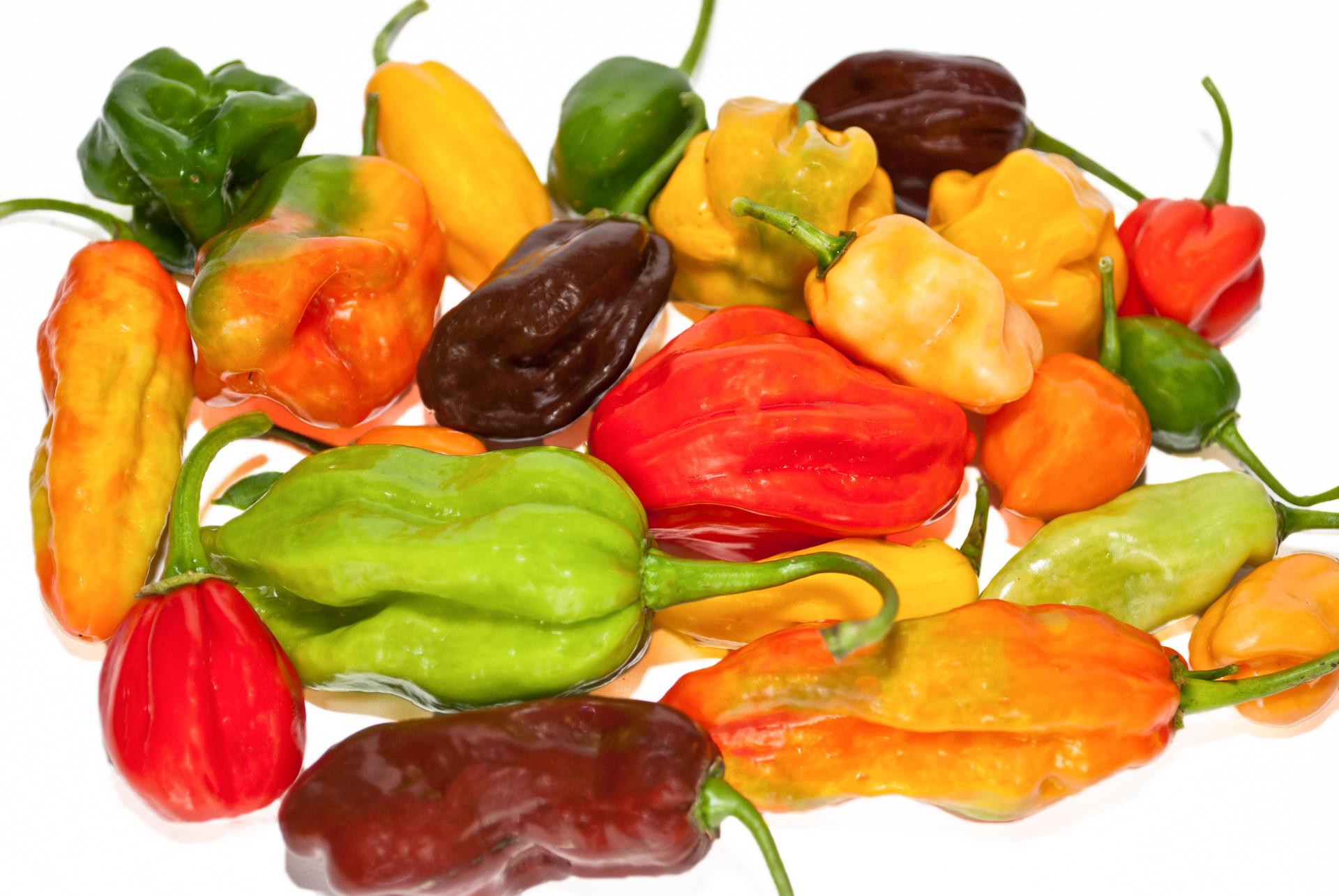 Chilisorten