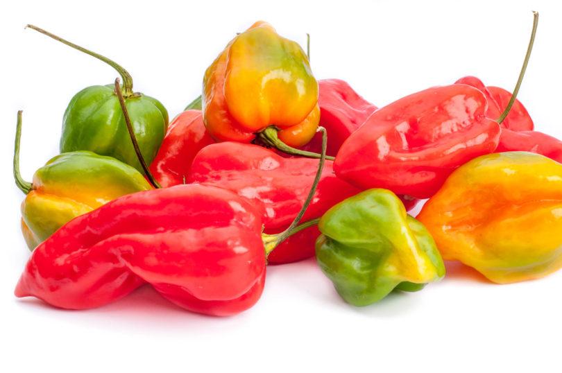 Devil's Tongue Red - Capsicum chinense