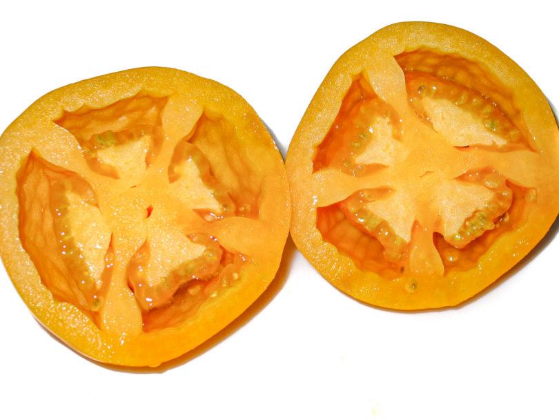 Die Früchte der Tomate Djena Lee's Golden Girl sind kräftig gelborange gefärbt