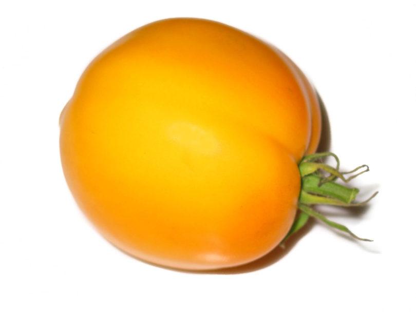 Die Tomatesorte Djena Lee's Golden Girl ist schmackhaft und ertragreich