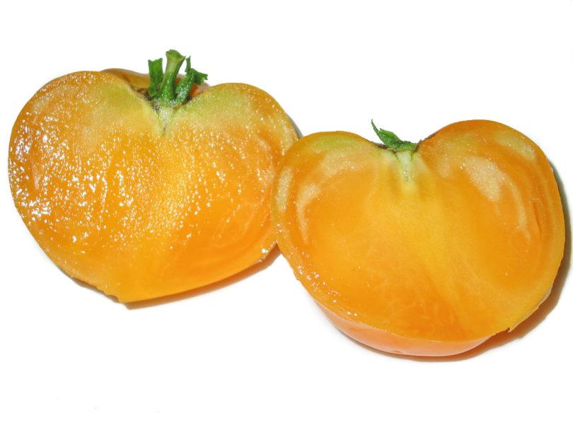 Tomatensorte Elfie