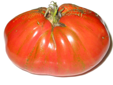 Fleischtomate aus Neapel - Solanum lycopersicum - Tomatensorte