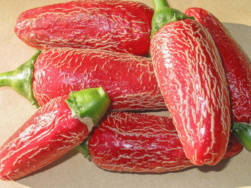 Jalapeño Jumbo gehört zur Art Capsicum annuum und wird in Mexiko zu Chile Chipotle verarbeitet