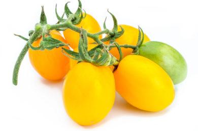 Japanisches Ei - Solanum lycopersicum - Tomatensorte