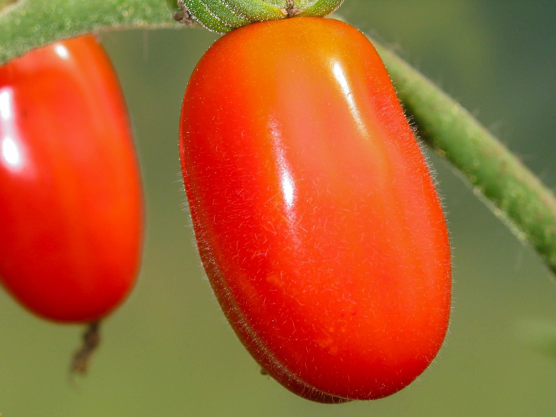 Jujube-Cherry