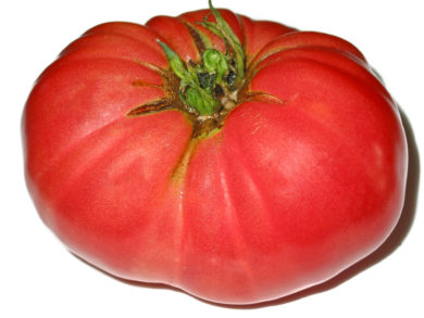 Marlowe Charleston - Solanum lycopersicum - Tomatensorte