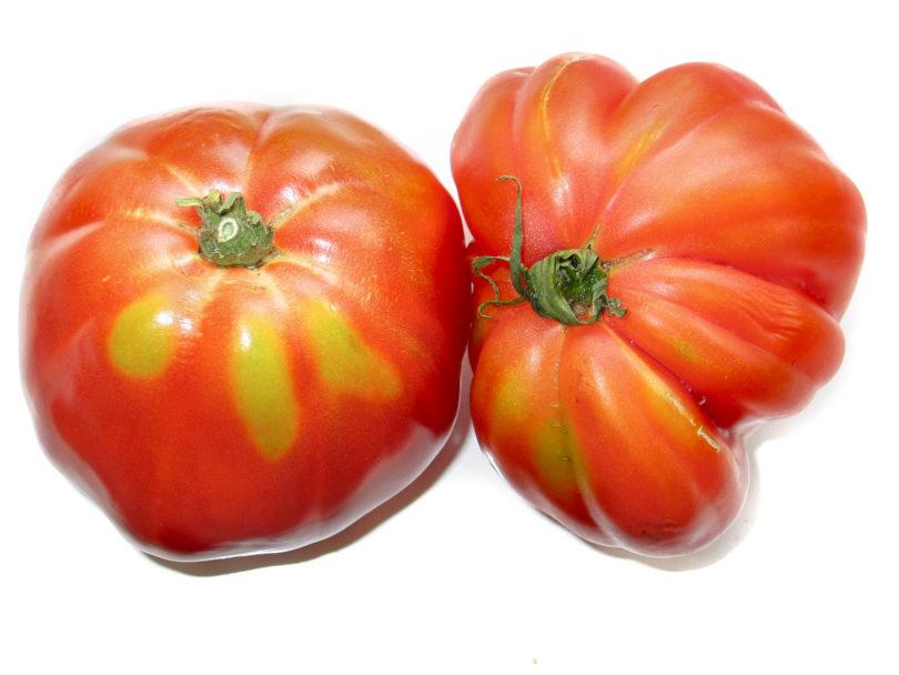 Die Früchte Fleischtomate Ochsenherz groß, rot und schmackhaft.