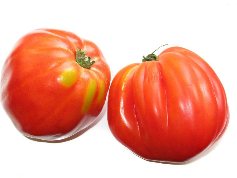 Die Tomatensorte ist ertragreich und schmeckt sehr gut