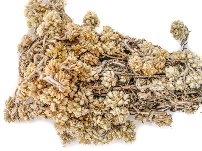 Die getrocknete Heilpflanze Gordolobo (Pseudognaphalium obtusifolium) von einem Markt in Mexiko