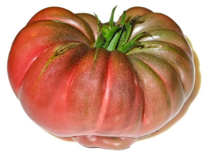 Die Tomate Purple Calabash ist eine sehr alte Tomatensorte mit schwarzem Fleisch.