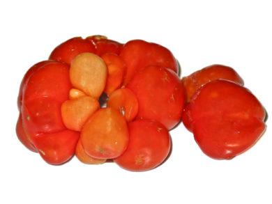 Reisetomate - Solanum lycopersicum - Tomatensorte
