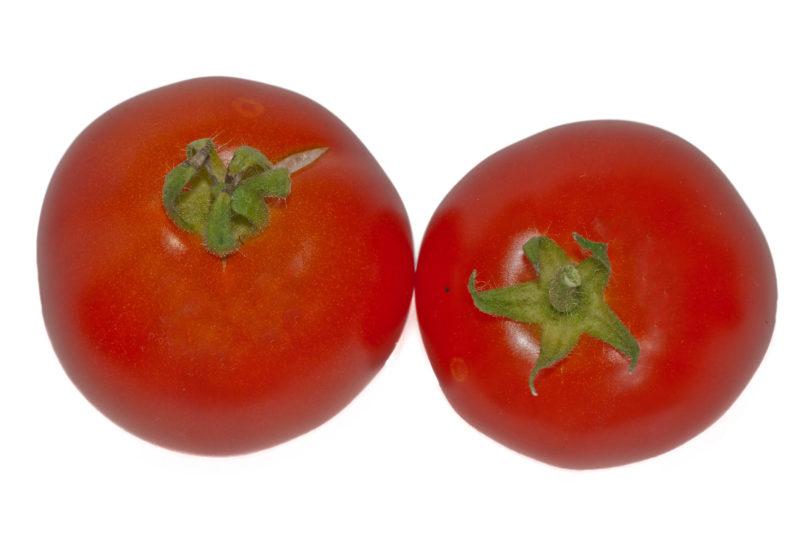 Rote runde Tomaten