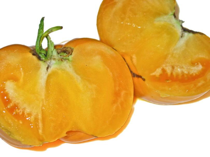 Die gelbe Tomate Yellow Giant schmeckt aromatisch, saftig und gut.