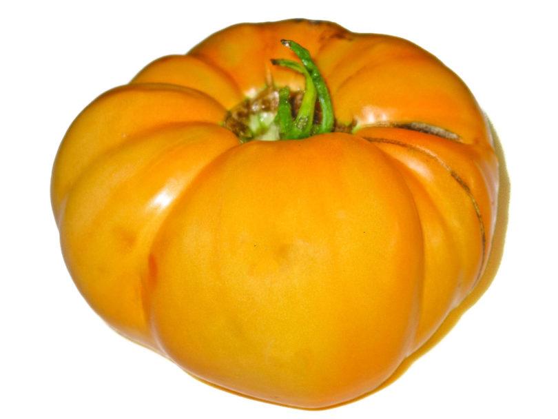 Die Tomatensorte Yellow Giant ist eine sehr große, gelbe Fleischtomate