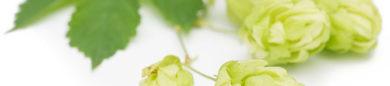 cropped-Humulus-lupulus-810x541.jpg
